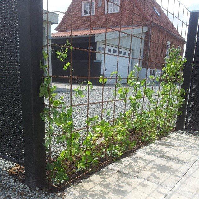 planter op ad hegn