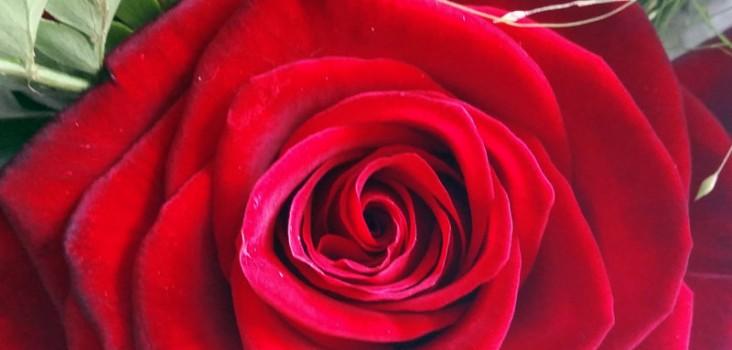 rod-rose