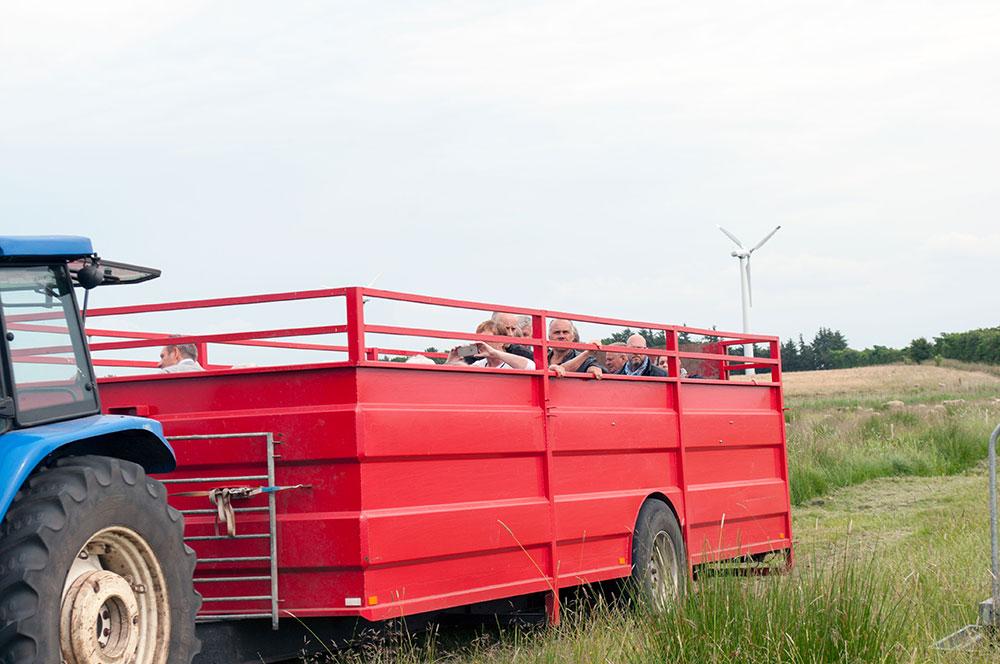 Lammefestival-2016-Varde-AAdal-202