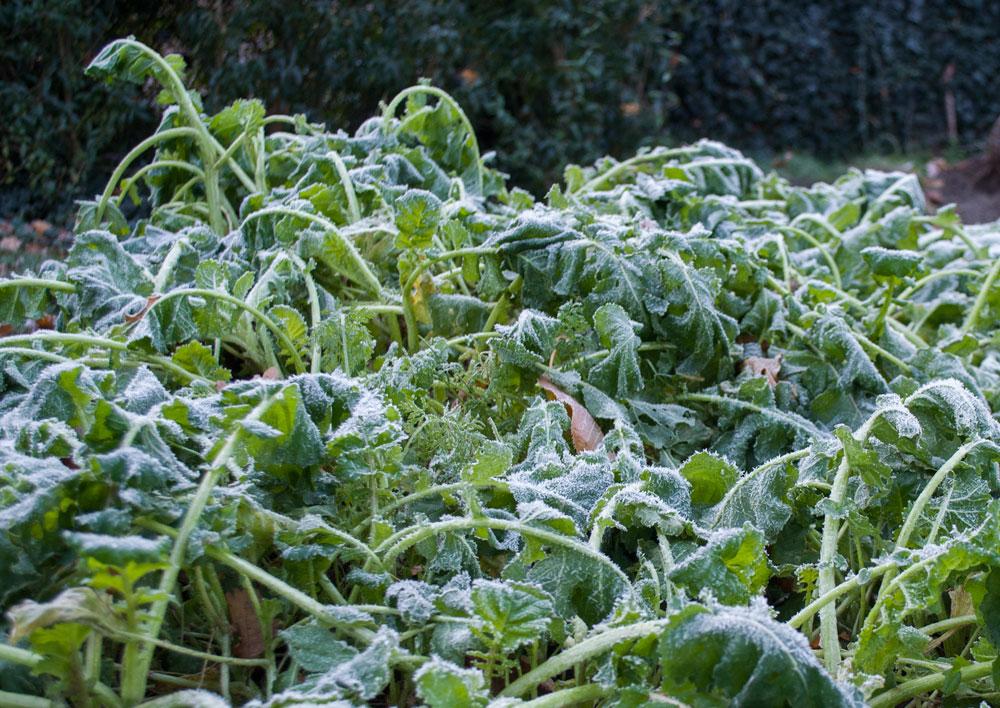 frost-afgroder-2