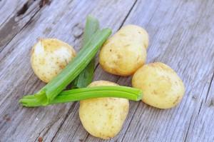 kartofler-foraarsloeg