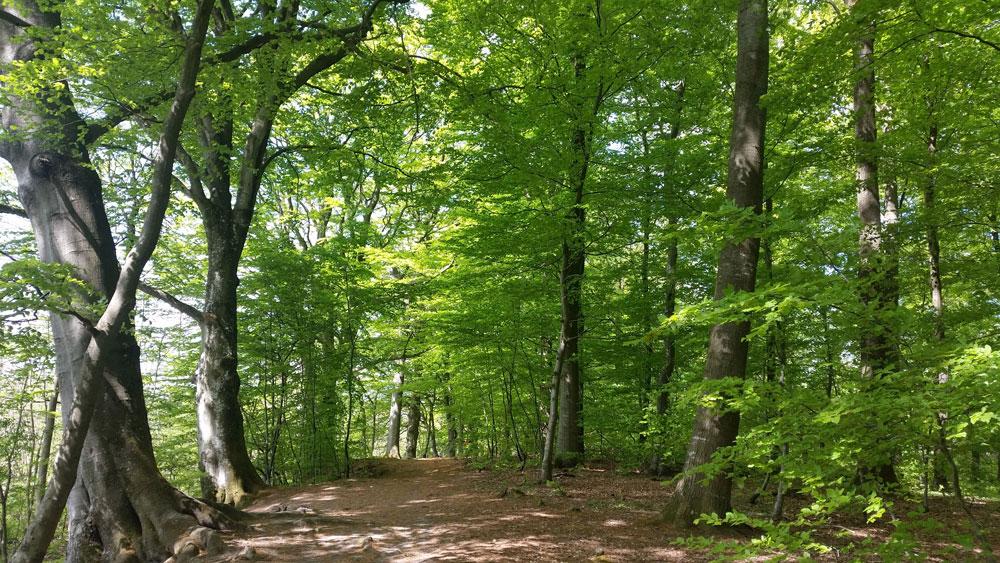 Silkeborg--bogeskoven