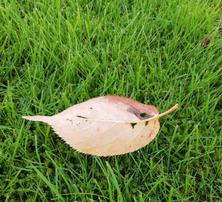 Efterårstanker i oktober